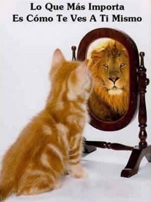 gato leon.jpg