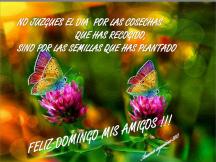 feliz-domingo-mis-amigos-anamar-argentina-2013.png