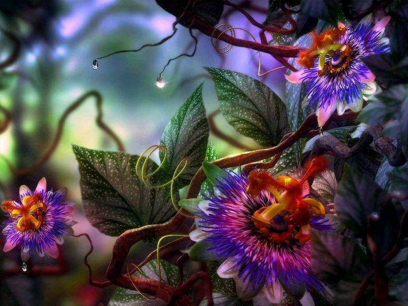 Flores Fantasia_800.jpg