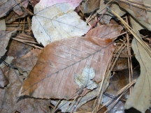 leaves08.jpg