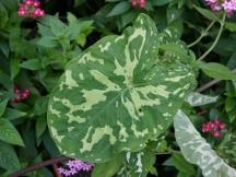leaves09.jpg