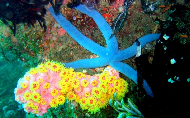 Viaje al fondo del mar (Fondo Marino) by www.JoseLuisAvilaHerrera.BLOGSPOT.com -14.JPG