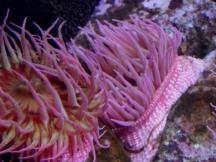 pink-anemones-2560x1440.jpg