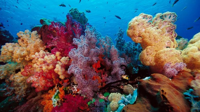 www.BANCODEIMAGENESGRATUITAS.com -  Fondo marino o SeaBed.jpg