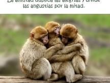 amigos_animales