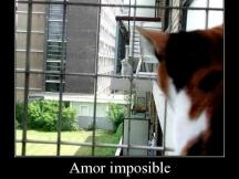 amor_imposible_1