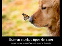 desmotivaciones-animales-con-frases-bonitas-para-facebook.png