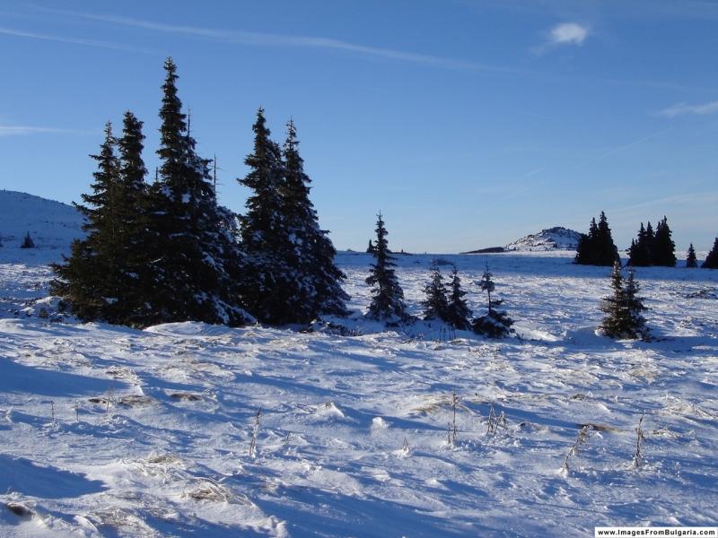 Winter-landscape _95_