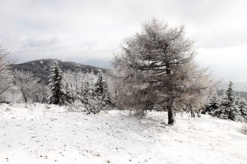 arbol invierno