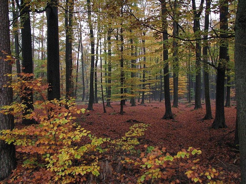 bosque-otoño